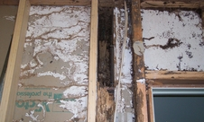 Termite damage in wall revealed when plaster was removed