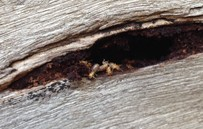 Termites in sleeper retaining wall